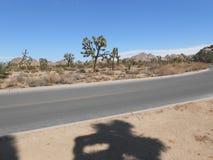 Joshua Tree National Park Royalty Free Stock Photos