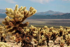 Joshua Tree National Park, Mojave Desert, California Stock Images