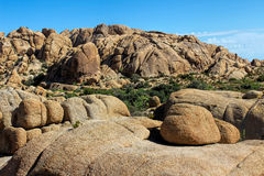 Joshua Tree National Park, Mojave Desert, California. Amazing nature of the Joshua Tree National Park which is part of dry Mojave Desert in California. Lots of Royalty Free Stock Image