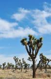 Joshua Tree National Park, Mojave Skies Royalty Free Stock Photos