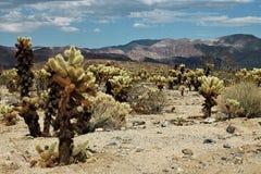 Joshua Tree National Park, Mojave-Wüste, Kalifornien Stockbilder