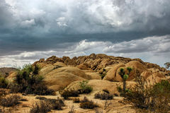 Joshua Tree National Park, Mojave-Wüste, Kalifornien, USA Stockbilder