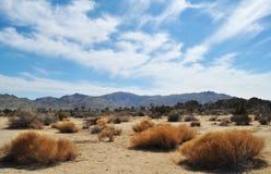 Joshua Tree National Park Mojavehimlar Fotografering för Bildbyråer