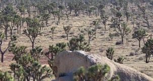 Joshua Tree National Park, California. Joshua Tree National Park panning view, California stock video