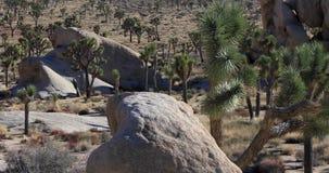 Joshua Tree National Park, California. Joshua Tree National Park panning view, California stock video footage