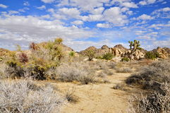 Joshua Tree National park. Ecological crossroads, where the high Mojave Desert meets the low Colorado Desert royalty free stock images