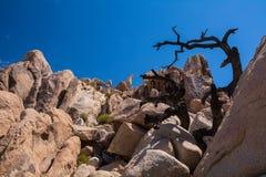 Joshua Tree National Park Rocks Royalty-vrije Stock Foto's
