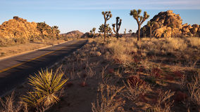 Joshua Tree National Park Scenic Drive. Early morning panorama of Joshua Tree National Park, California Royalty Free Stock Images