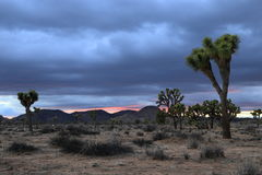 Joshua Tree National Park. Stormy afternoon at Joshua Tree National Park Royalty Free Stock Images