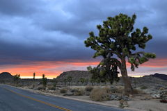 Joshua tree national park. Stormy day at Joshua tree national park right during twilight Stock Images