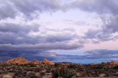 Joshua tree national park. Stormy late afternoon at Joshua tree national park, California Stock Images
