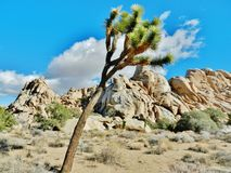 Joshua Tree National Park Royalty Free Stock Images