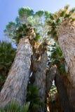 Joshua Tree National Park Stock Photography