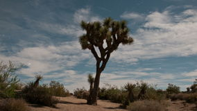 Joshua Tree National Park. Time Lapse of Joshua Tree in the Desert - 4K - 4096x2304 stock footage
