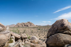 Joshua Tree National Park Typical View Royalty Free Stock Images