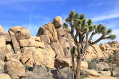 Joshua tree national park. Unique rock formation at Joshua tree National Park, California Royalty Free Stock Image