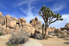 Joshua tree national park. Unique rock formation at Joshua tree national park on a sunny afternoon Stock Photo
