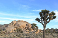 Joshua tree national park. Unique rock formation at Joshua tree national park on a sunny afternoon Stock Image