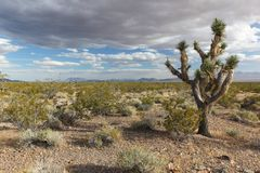 Joshua Tree National Park, USA Stock Photos