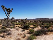 Joshua tree national park, usa stock image