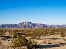 Joshua Tree National Park Stock Images