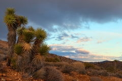 Joshua tree national park. A viewpoint at Joshua tree national park right before a sunset Stock Photo
