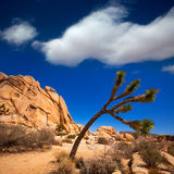 Joshua Tree National Park Yucca Valley Mohave desert California Royalty Free Stock Photo