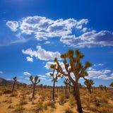 Joshua Tree National Park Yucca Valley Mohave desert California Stock Photo