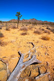 Joshua Tree National Park Yucca Valley Mohave desert California Royalty Free Stock Images