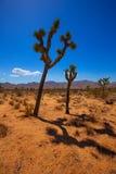 Joshua Tree National Park Yucca Valley Mohave desert California Royalty Free Stock Image