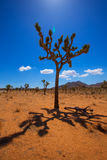 Joshua Tree National Park Yucca Valley Mohave desert California Royalty Free Stock Photos