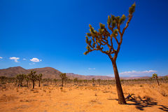 Joshua Tree National Park Yucca Valley Mohave desert California Stock Image