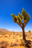 Joshua Tree National Park Yucca Valley Mohave desert California Stock Images