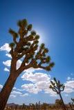 Joshua Tree National Park Yucca Valley Mohave desert California Stock Photos