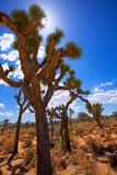 Joshua Tree National Park Yucca Valley Mohave desert California Stock Photography