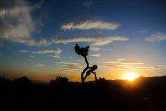 Joshua Tree National Park, Zonsondergang stock foto's