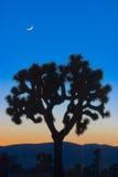 Joshua Tree and the New Moon Stock Photo