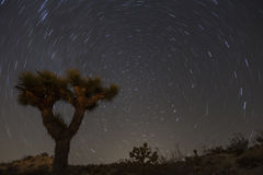 Joshua Tree and North Star Royalty Free Stock Image