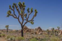 Joshua Tree NP Lizenzfreies Stockbild