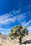 Joshua Tree NP Stock Photos