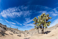 Joshua Tree NP Royalty Free Stock Photos