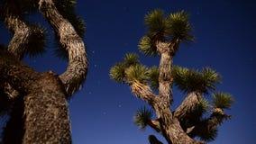 Joshua Tree på nattfullmånen - den Tid schackningsperioden - Dolly Pan - 4K arkivfilmer