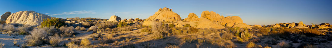 Joshua Tree Panorama Stock Photography