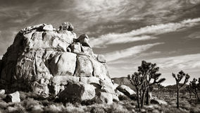 Joshua Tree Panorama in Black and White Stock Photography