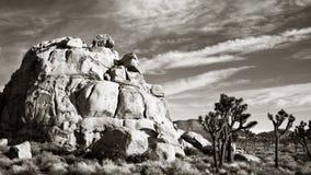 Joshua Tree Panorama in Black and White stock photography