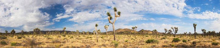 Joshua Tree Panroama stock photos