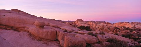 Joshua Tree Park Royalty Free Stock Image
