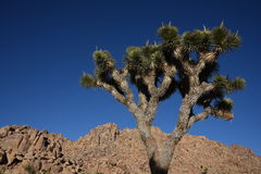 Joshua Tree Park Stockbild