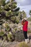 Joshua Tree and Photographer Royalty Free Stock Photos