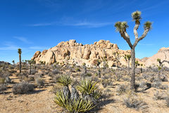 Joshua Tree Rock Climbers Royalty Free Stock Photos